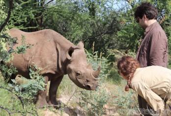 Loijipu the black rhino, Saruni Rhino Kenya