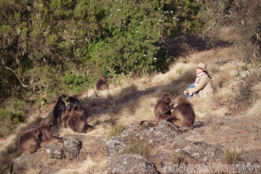 Sitting with a group of gelada monkeys