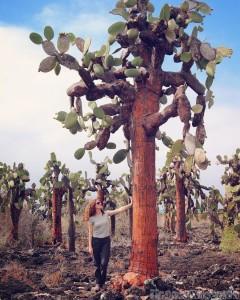 Galapagos opuntia echios cactus trees