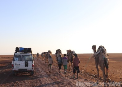 Cars and camels on a road in the Danakil Depression