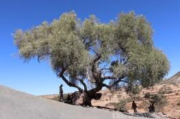 Kids under a wild olive tree in Ethiopia
