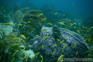 Tobago diving Man-O-War Bay