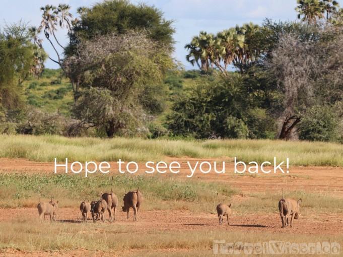 Warthog backsides, Samburu Kenya
