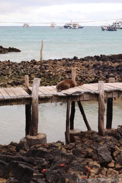 Puerto Ayora seaview