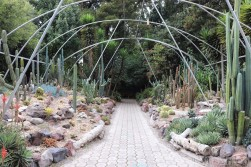 Cactus garden, Jardin Botanico Quito