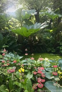 Cashel House garden