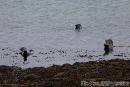 Inishmore seal colony