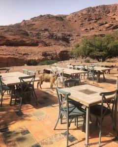 Feynan ecolodge goats at breakfast