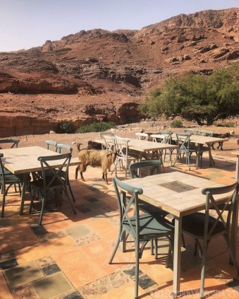 Feynan ecolodge goats at breakfast