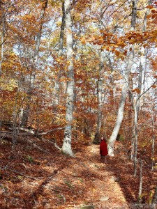 Fall hiking in Camden Hills State Park