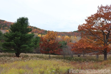 Fall foliage, Acadia National Park Maine