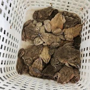 Live toads at Causeway Bay Market Hong Kong