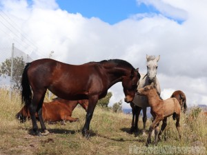 Horses at Hacienda Santa Ana, Ecuador