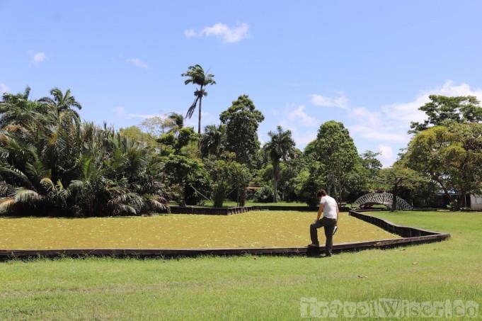 Manatee pond, botanical gardens Georgetown Guyana
