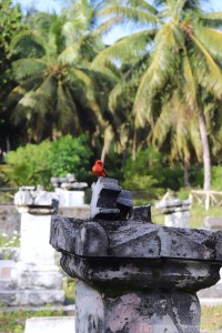 Red cardinal fody on a grave stone at l'Union Estate La Digue