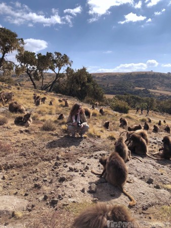 Sofie surrounded by gelada monkeys in the Simien Mountains