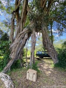 Bush picnic, Kitich Forest Camp Kenya