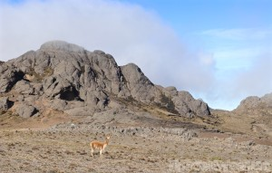 Reserva de Produccion Faunistica Chimborazo
