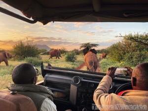 Elephants at sunrise on a game drive in Samburu National Reserve Kenya