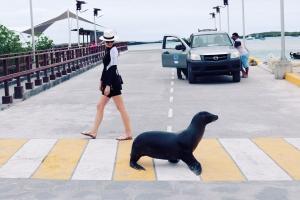 Travel Wiser Galapagos Islands itinerary