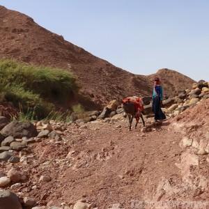 Bedouin girl and donkey, Jordan road trip
