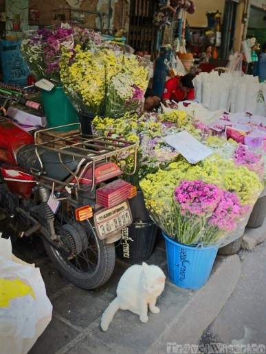 Cat and motorcycle at Pak Khlong Talat Bangkok flower market
