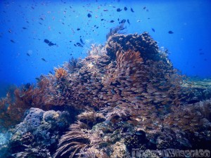 Underwater scene, diving in Komodo National Park