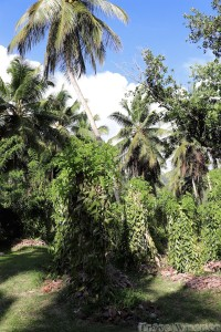 L'Union Estate Farm vanilla plantation, La Digue