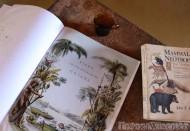 Books about Guyana