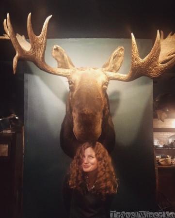 Moose head, Broad Arrow Tavern Freeport