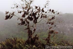 Scalesia forest at Los Gemelos Isla Santa Cruz