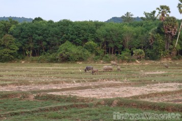 Agriculture on Koh Yao Noi