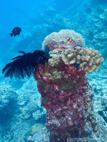 Underwater pinnacle with anemone and clownfish